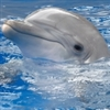 View DolphinPolice's Profile