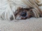 View DogGirl5ONE's Profile