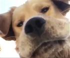 View pupper_sama's Profile
