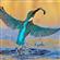 View Robijnvogel's Profile