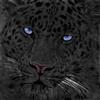 View Mathew_653's Profile