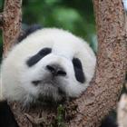 View panda_hxb's Profile