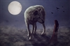 View wolfblood77658's Profile