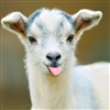 View mightygoat42's Profile