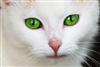 View AnimalLover567's Profile