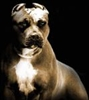 View PITBULL4578's Profile