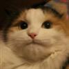 View Catbox_'s Profile