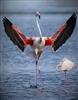 View Tricker_birder's Profile