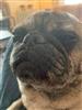 View Squishio's Profile