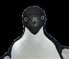 View bobyjones177's Profile