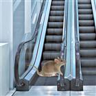 View escalatormouse's Profile