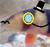 View CrawfishPrime's Profile