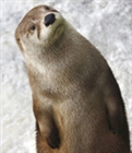 View an_otter's Profile