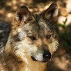 View sarahwolf449's Profile