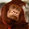 View Donkey_Kong's Profile