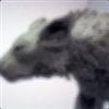 View grimhound's Profile