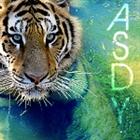 View ASDY333's Profile