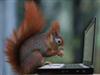 View PetSquirrel's Profile