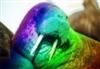 View MagicalRainbowWalruses's Profile
