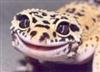 View strongecko15's Profile